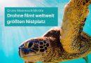 Grüne Meeresschildkröte: Drohnenvideo überrascht Wissenschaftler