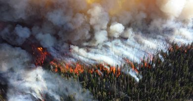 Ein Wald brennt lichterloh. Der Wind treibt das Feuer vor sich her. Für die Waldbrandbekämpfung ein äußerst schwieriges Unterfangen.