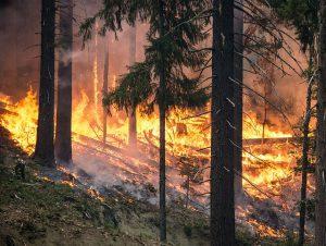 Wenn wir hier der Wald lichterloh brennt ist es wichtig, die Maßnahmen der Waldbrandbekämpfung an den strategisch richtigen Orten zum Einsatz zu bringen.